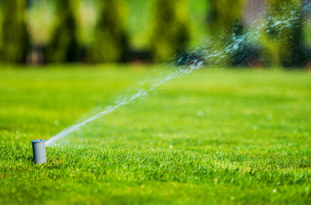 Maintenance Guidelines for your Lawn